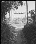 Dorman cover